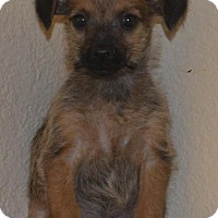 Adopt A Pet :: Herbs: Rosemary - Palo Alto, CA