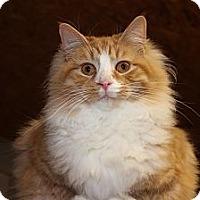 Adopt A Pet :: Bruno - Maxwelton, WV