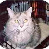 Adopt A Pet :: Chantilly - Clementon, NJ