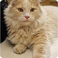 Adopt A Pet :: Thurston - Racine, WI