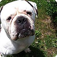 Adopt A Pet :: Tonka - Jackson, MI