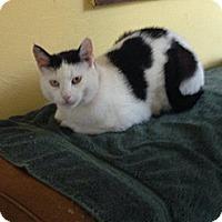 Adopt A Pet :: Annabelle - Lancaster, MA