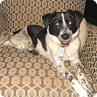 Adopt A Pet :: Savannah - Toledo, OH