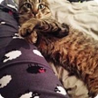 Adopt A Pet :: Chaz - Vancouver, BC