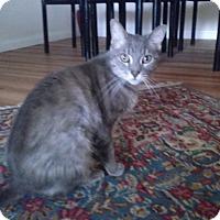 Adopt A Pet :: Peeshee - Laguna Woods, CA
