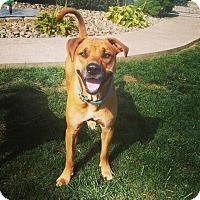 Adopt A Pet :: Camo - Morgantown, WV
