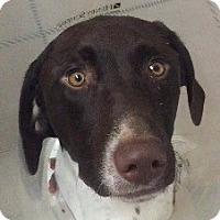 Adopt A Pet :: *URGENT* Cisco - Van Nuys, CA