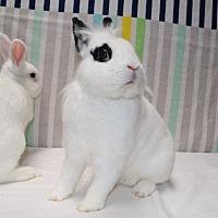 Adopt A Pet :: Doe - Montclair, CA