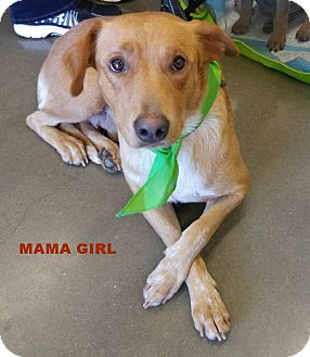 Labrador Retriever/Hound (Unknown Type) Mix Dog for adoption in Baton Rouge, Louisiana - Mama Girl