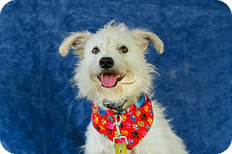 Terrier (Unknown Type, Small) Mix Dog for adoption in Vancouver, British Columbia - Cassidy