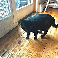 Adopt A Pet :: Tom - New Milford, CT