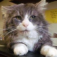 Adopt A Pet :: teddy - Muskegon, MI