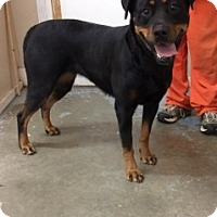 Adopt A Pet :: 6309 - Calhoun, GA