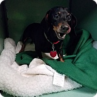 Adopt A Pet :: Millie - Lubbock, TX