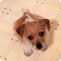 Adopt A Pet :: Jonnie - Sugar Grove, IL