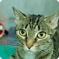 Adopt A Pet :: Amaya - Bradenton, FL