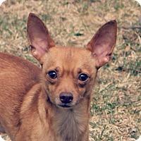 Adopt A Pet :: Sonny - Lisbon, IA