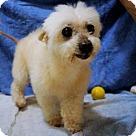 Adopt A Pet :: Leila