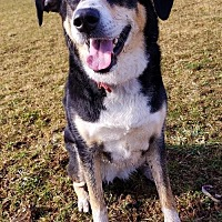 Husky/Hound (Unknown Type) Mix Dog for adoption in Hornell, New York - Brooklyn