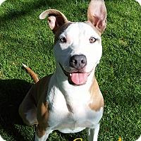 Adopt A Pet :: Carmela - El Cajon, CA