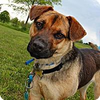 Adopt A Pet :: Matilda - Dillsburg, PA