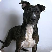 Adopt A Pet :: Binicia - Redding, CA