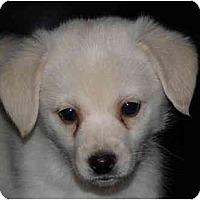 Adopt A Pet :: Napoleon - Toronto/Etobicoke/GTA, ON
