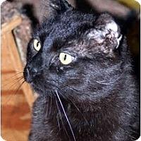 Adopt A Pet :: Reggie - Racine, WI