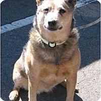 Adopt A Pet :: Greta Garbo *Adoption Pending* - Phoenix, AZ