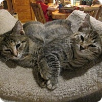Adopt A Pet :: Mina & Taylor - Richland, MI