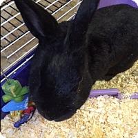 Adopt A Pet :: Lola - Middle Island, NY