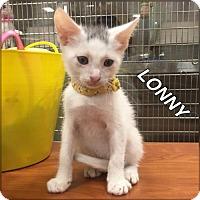 Adopt A Pet :: LONNY - Orlando, FL