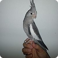 Adopt A Pet :: Tammy - St. Louis, MO