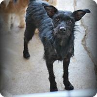 Adopt A Pet :: Jody - Jennings, OK
