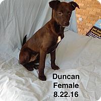 Adopt A Pet :: Duncan meet me 1/6 - Manchester, CT