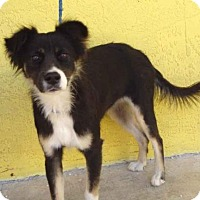 Adopt A Pet :: Tranquility - Littleton, CO