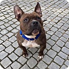 Adopt A Pet :: Zaney