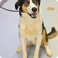 Adopt A Pet :: Scout - Meridian, ID