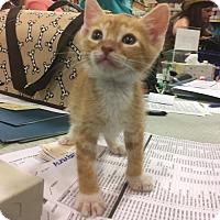 Adopt A Pet :: Cooper - Boynton Beach, FL