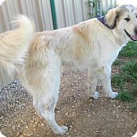 Adopt A Pet :: BOB - Pilot Point, TX