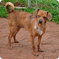 Adopt A Pet :: Pixie - Athens, GA