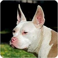 Adopt A Pet :: PIXY - Phoenix, AZ