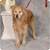 Adopt A Pet :: Duffy - Fort Hunter, NY