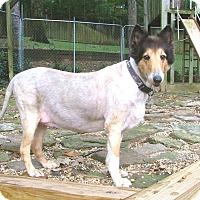 Adopt A Pet :: Ollie - North Little Rock, AR
