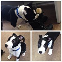 Adopt A Pet :: Jason - South Windsor, CT