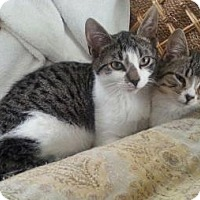 Adopt A Pet :: Kippy - Raritan, NJ
