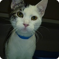 Adopt A Pet :: Nate - Hamburg, NY