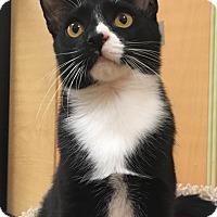 Adopt A Pet :: Jovonte' - Monroe, GA
