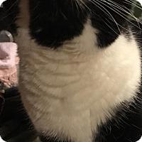 Adopt A Pet :: Lydia - Covington, KY