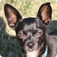 Adopt A Pet :: Houston - Edmonton, AB
